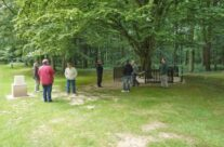 Only original surviving tree in Delville Wood – Somme and Ypres Battlefield Tour