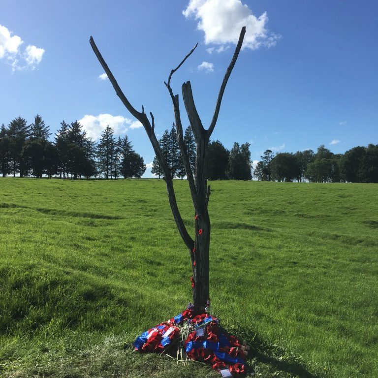 30 The 'danger tree' at Newfoundland Memorial Park