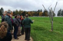 The Danger Tree at Newfoundland Park – Somme and Ypres Battlefield Tour