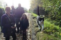 The Essex Farm cat – Somme and Ypres Battlefield Tour