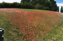 Sea of poppies at Tyne Cot for the Passchendaele 100th Anniversary Remembrance Service – Passchendaele Anniversary Remembrance Battlefield Tour