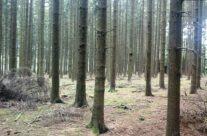 Bois Jacques (Jacks Wood) outside Foy – Easy Company Private Battlefield Tour