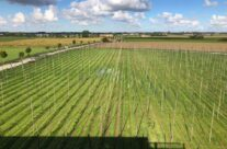 The recently picked hop fields at St Bernardus Brewery – Beers and Battlefields of Flanders WW1 Tour