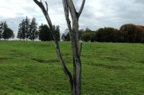 The Danger Tree at Newfoundland Memorial Park, Beaumont Hamel, Somme and Ypres Battlefield Tour